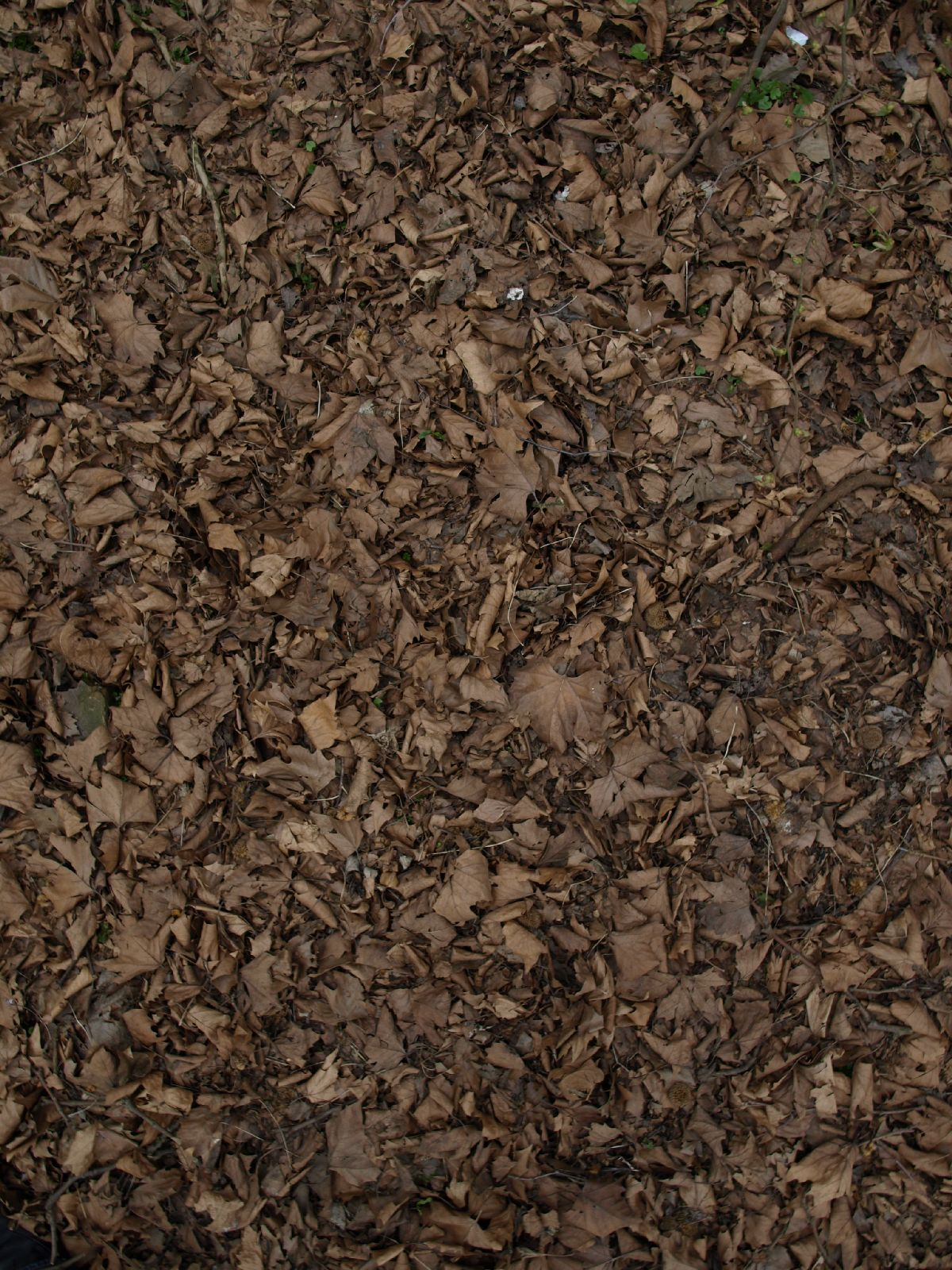 Ground-Nature_Texture_A_P4120853