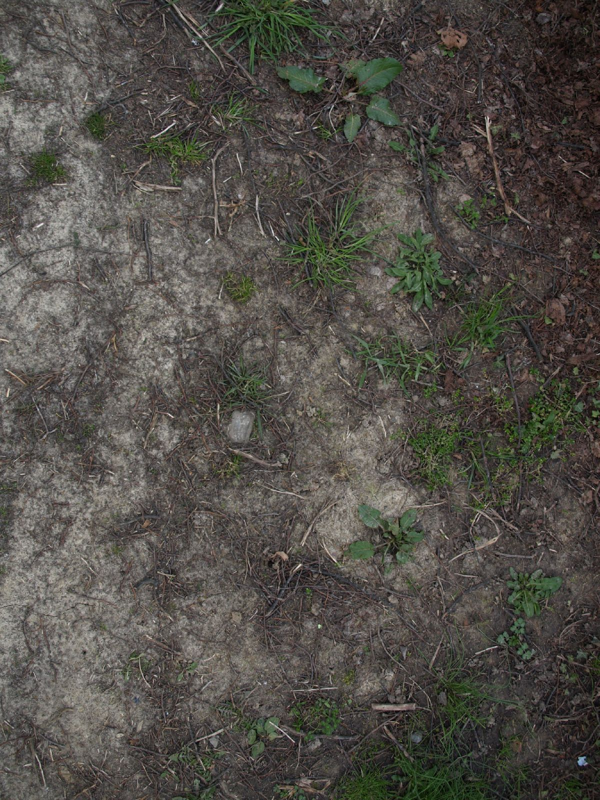 Ground-Nature_Texture_A_P4120933