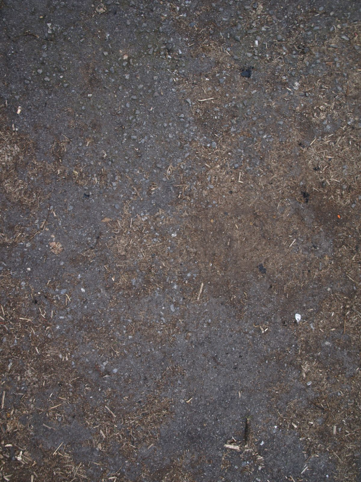 Ground-Nature_Texture_A_P4121005