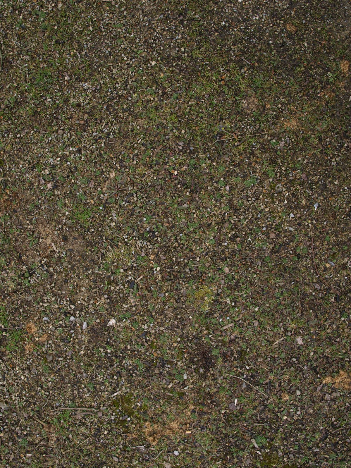 Ground-Nature_Texture_A_P4131106
