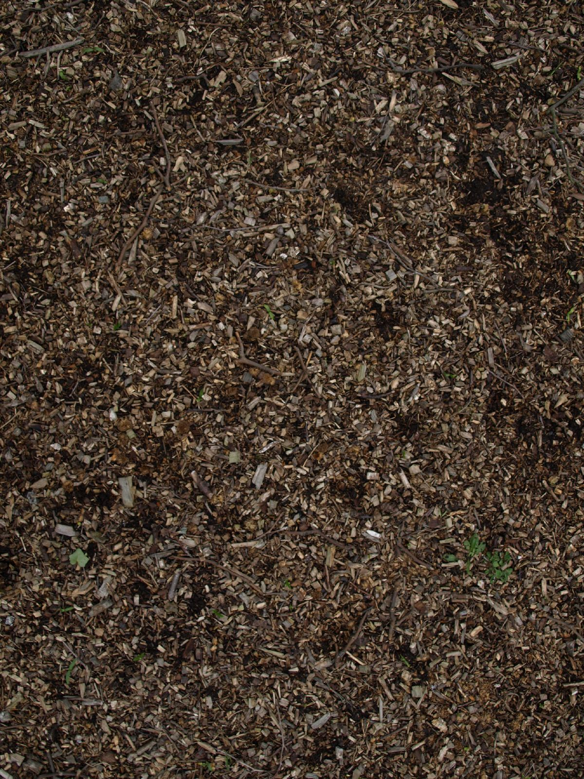 Ground-Nature_Texture_A_P4131165
