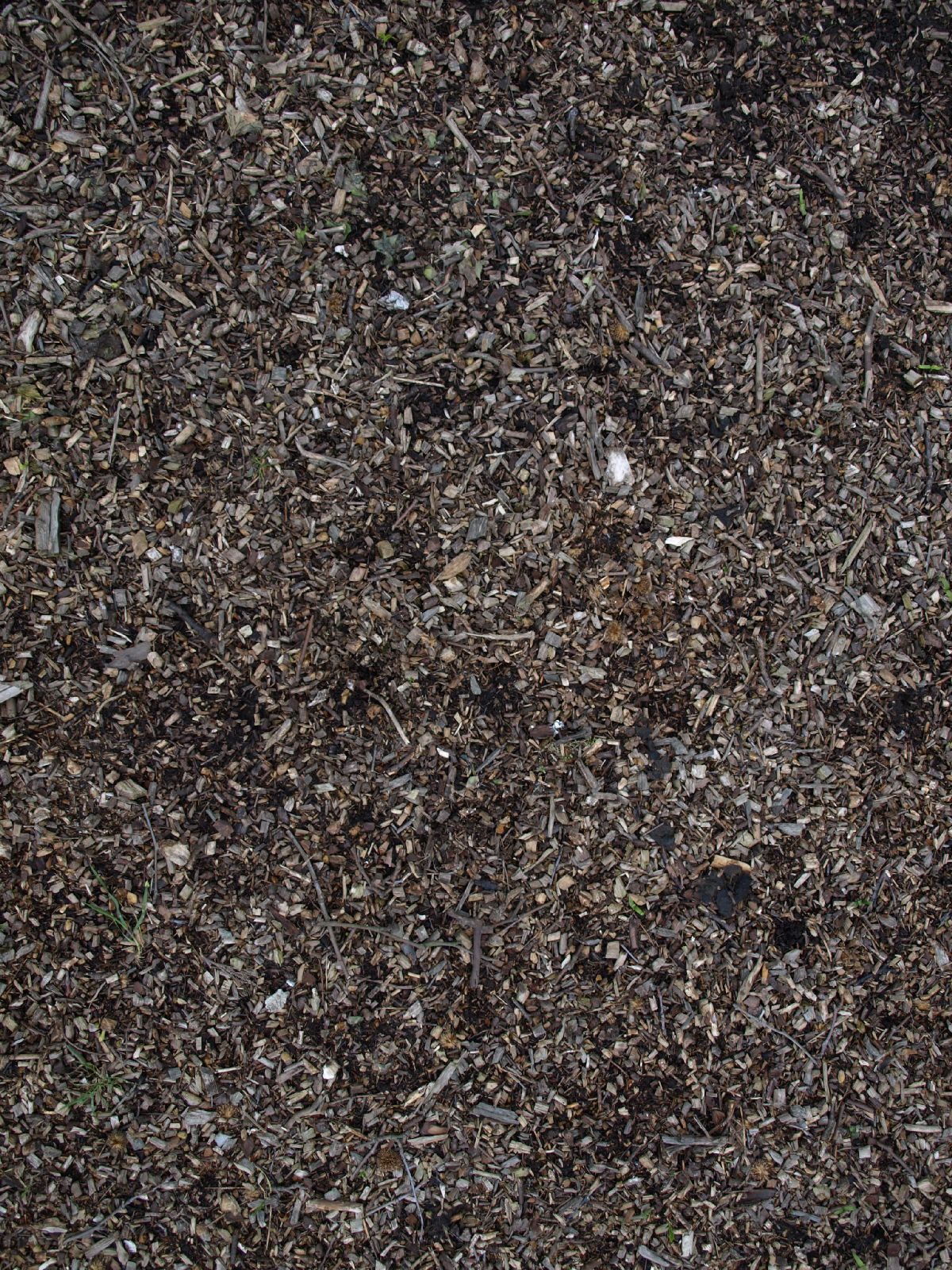 Ground-Nature_Texture_A_P4131169