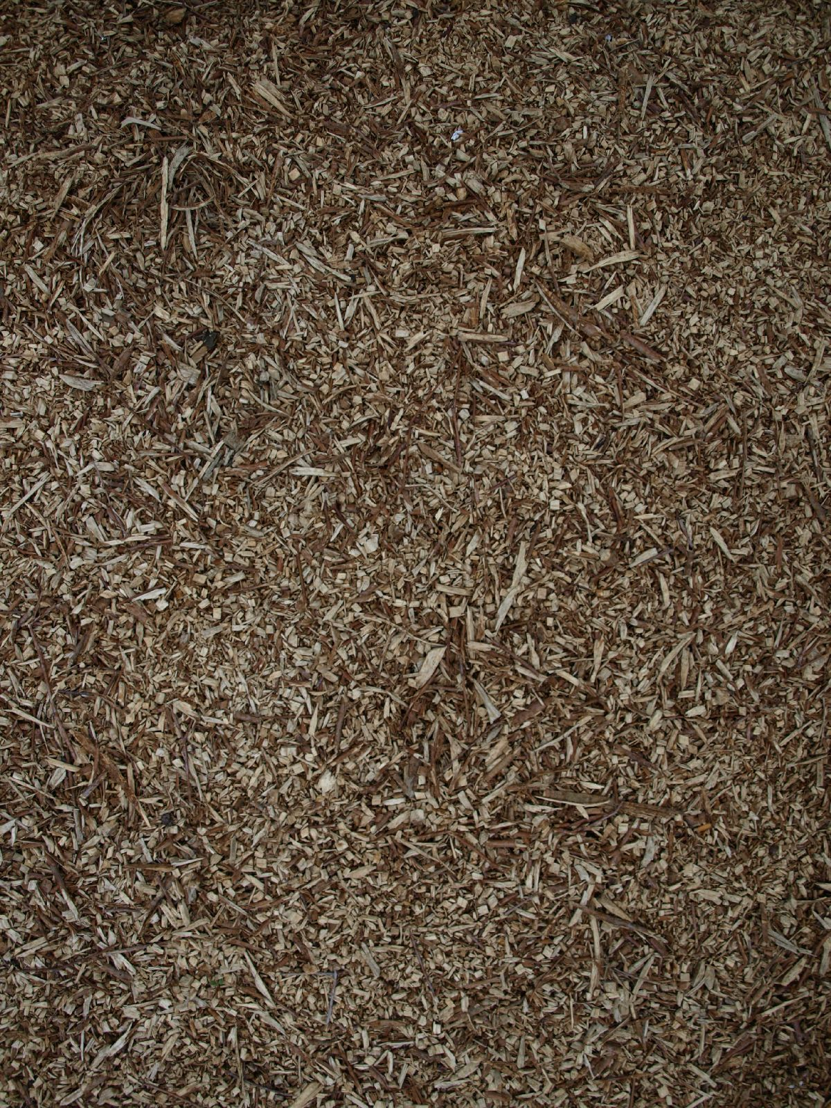 Ground-Nature_Texture_A_P4131226