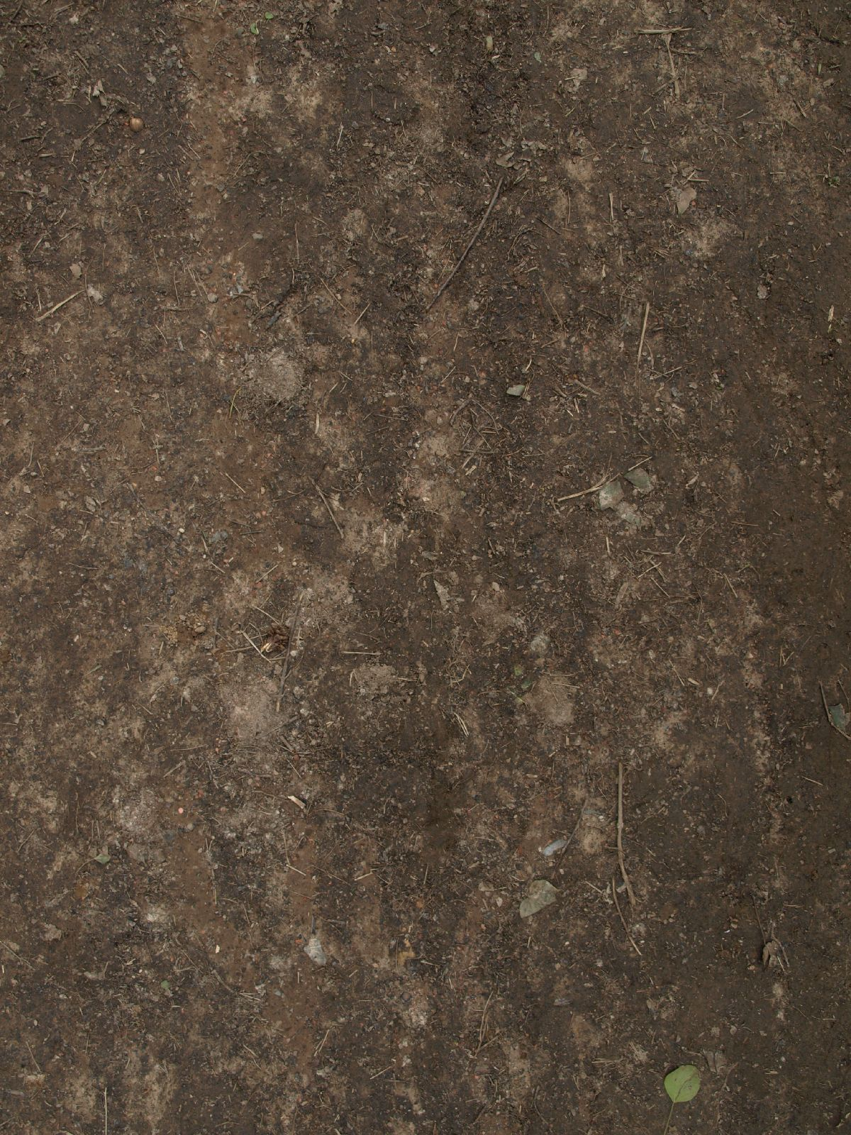 Ground-Nature_Texture_A_P4231708