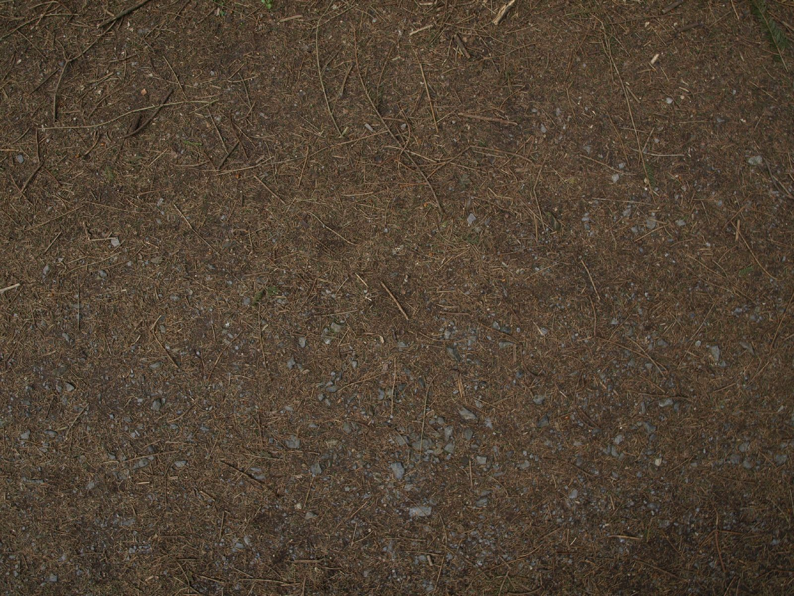 Ground-Nature_Texture_A_P4231718