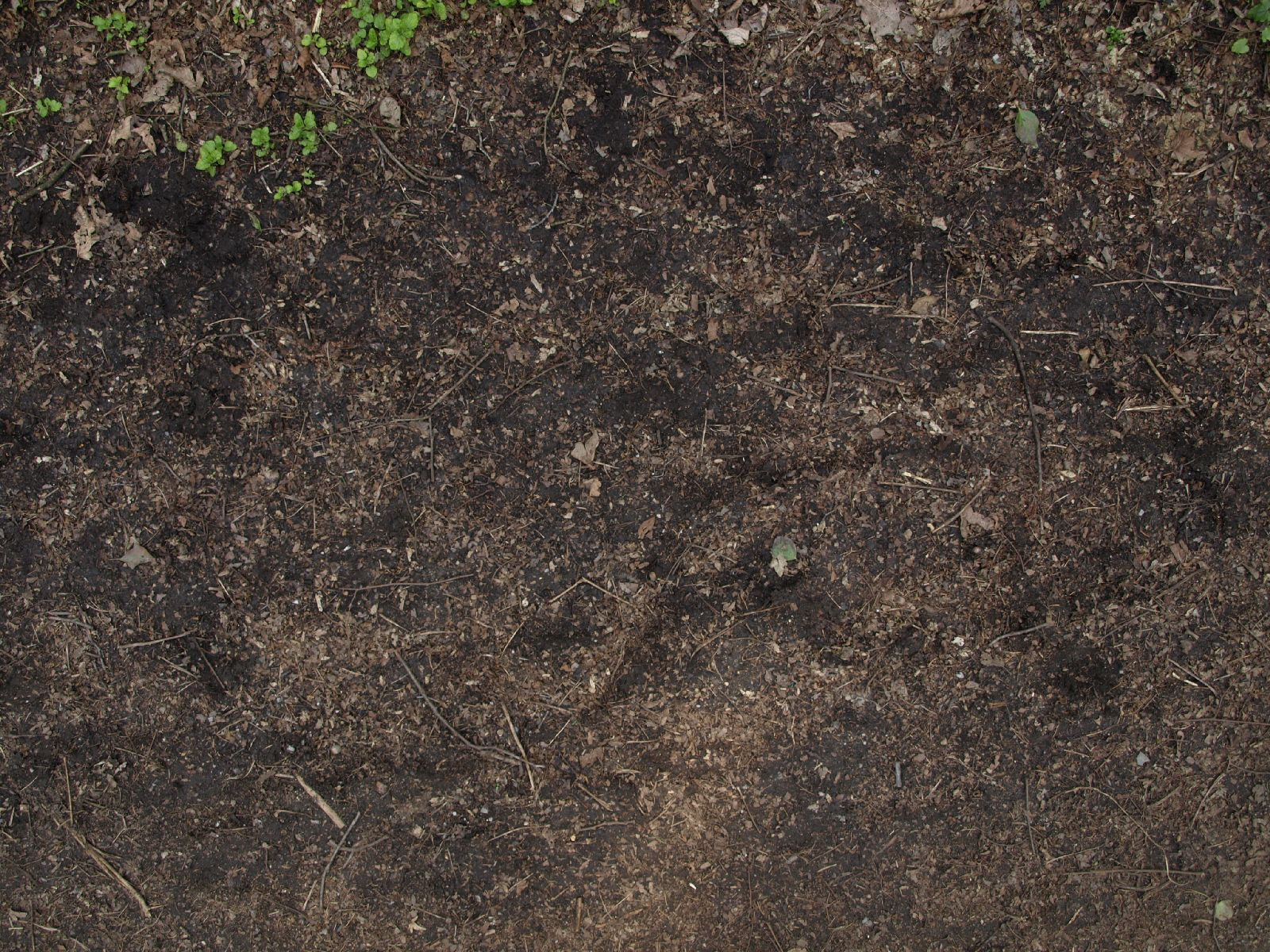 Ground-Nature_Texture_A_P4231733