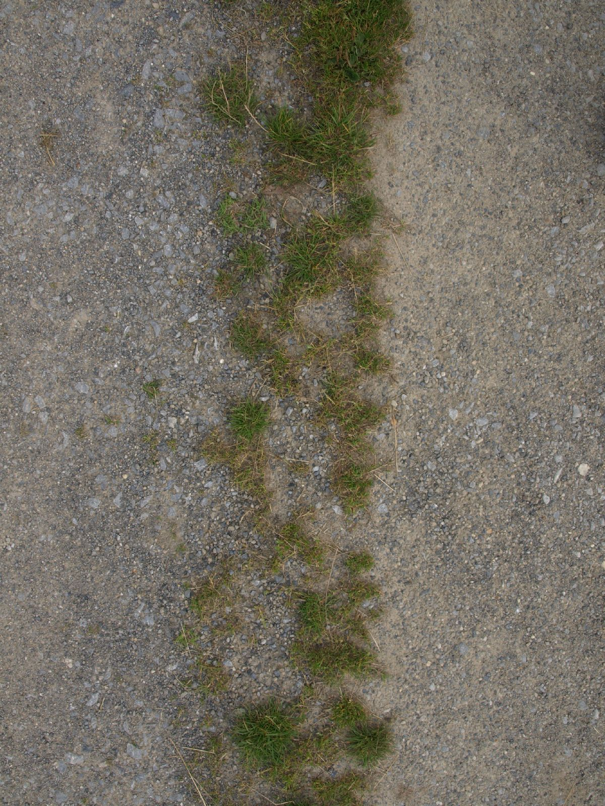 Ground-Nature_Texture_A_P8174449