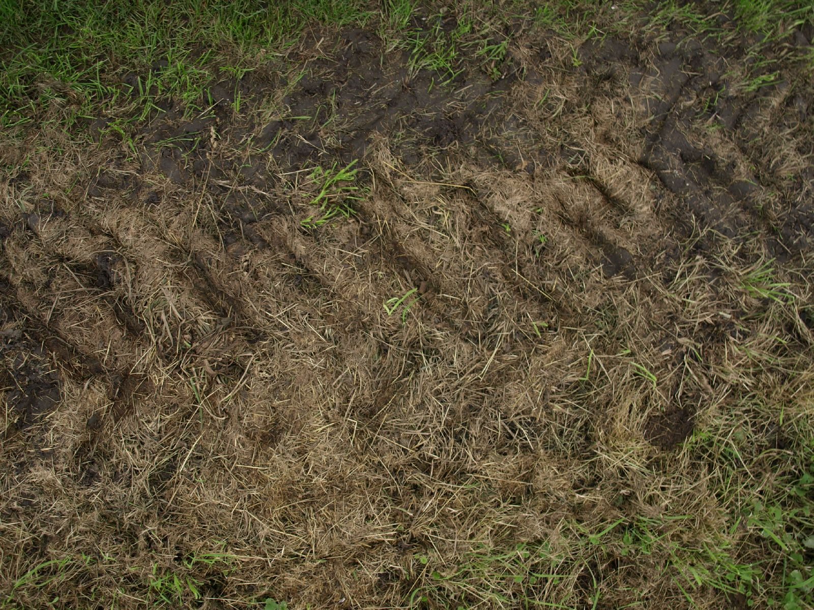 Ground-Nature_Texture_A_P9134867