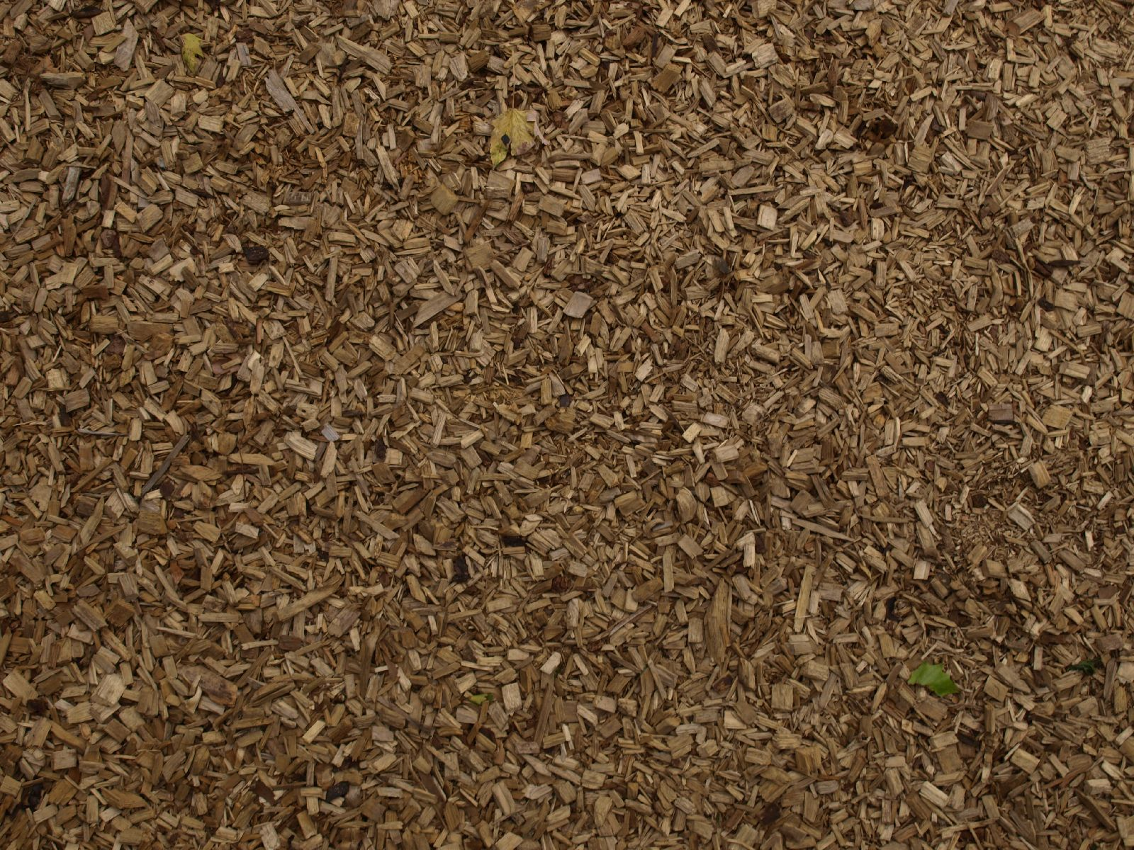 Ground-Nature_Texture_A_PA039924