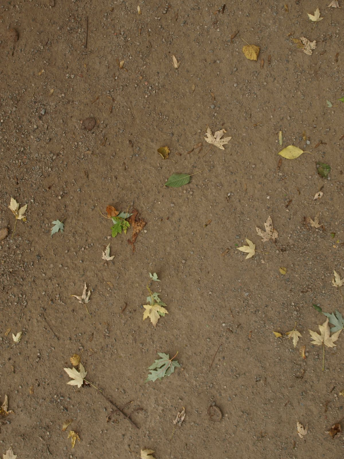 Ground-Nature_Texture_A_PA039927