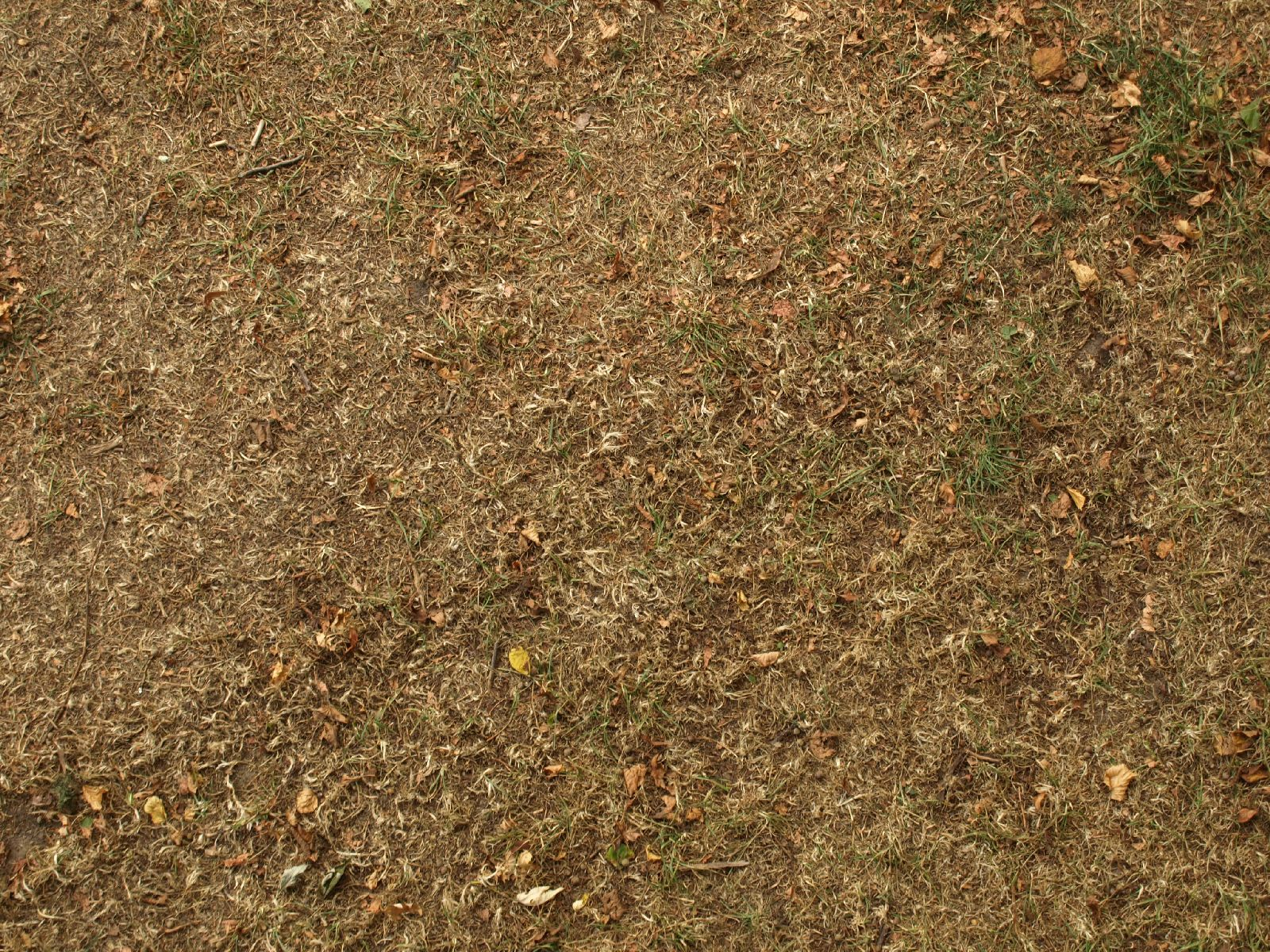 Ground-Nature_Texture_A_PA039928
