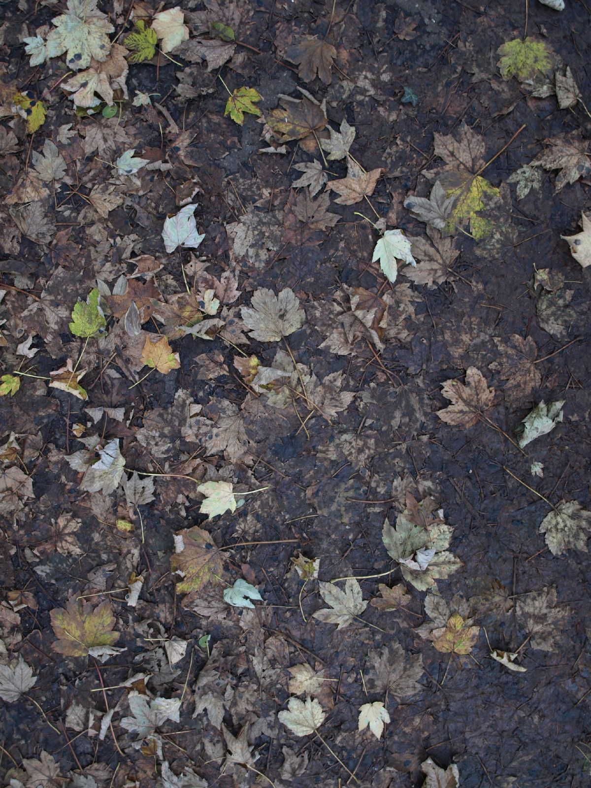 Ground-Nature_Texture_A_PB026453