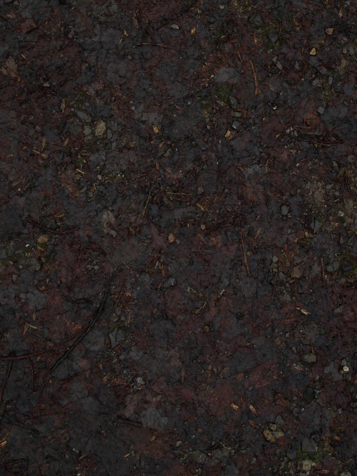 Ground-Nature_Texture_A_PC217922