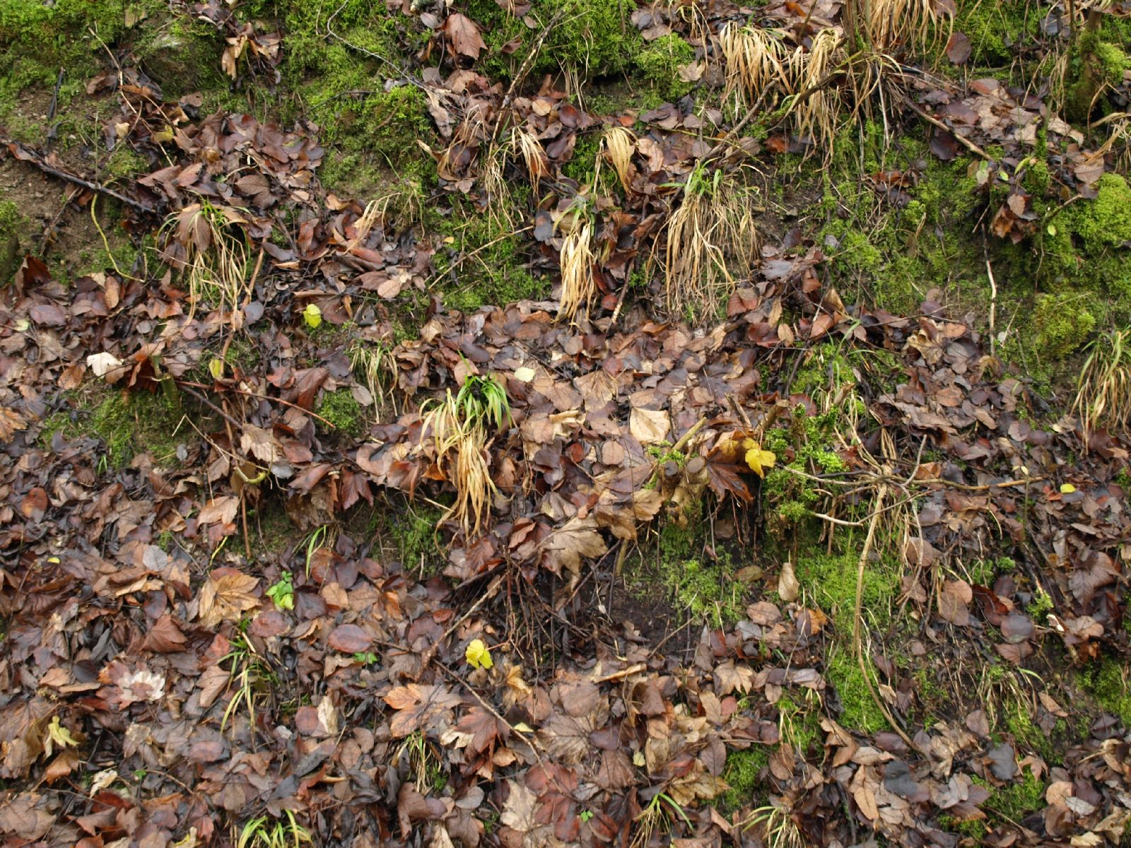 Ground-Nature_Texture_A_PC217949