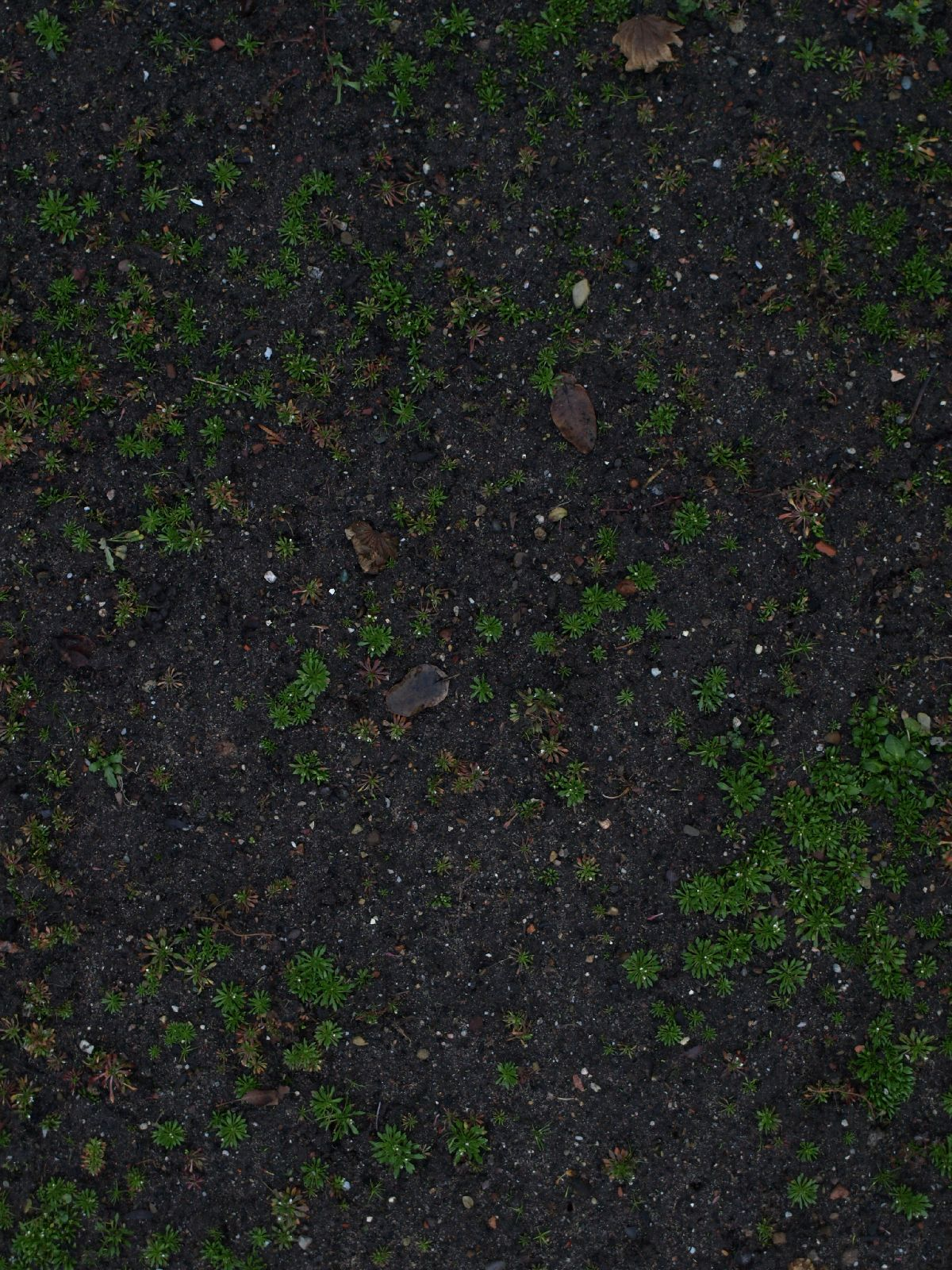 Ground-Nature_Texture_A_PC258292