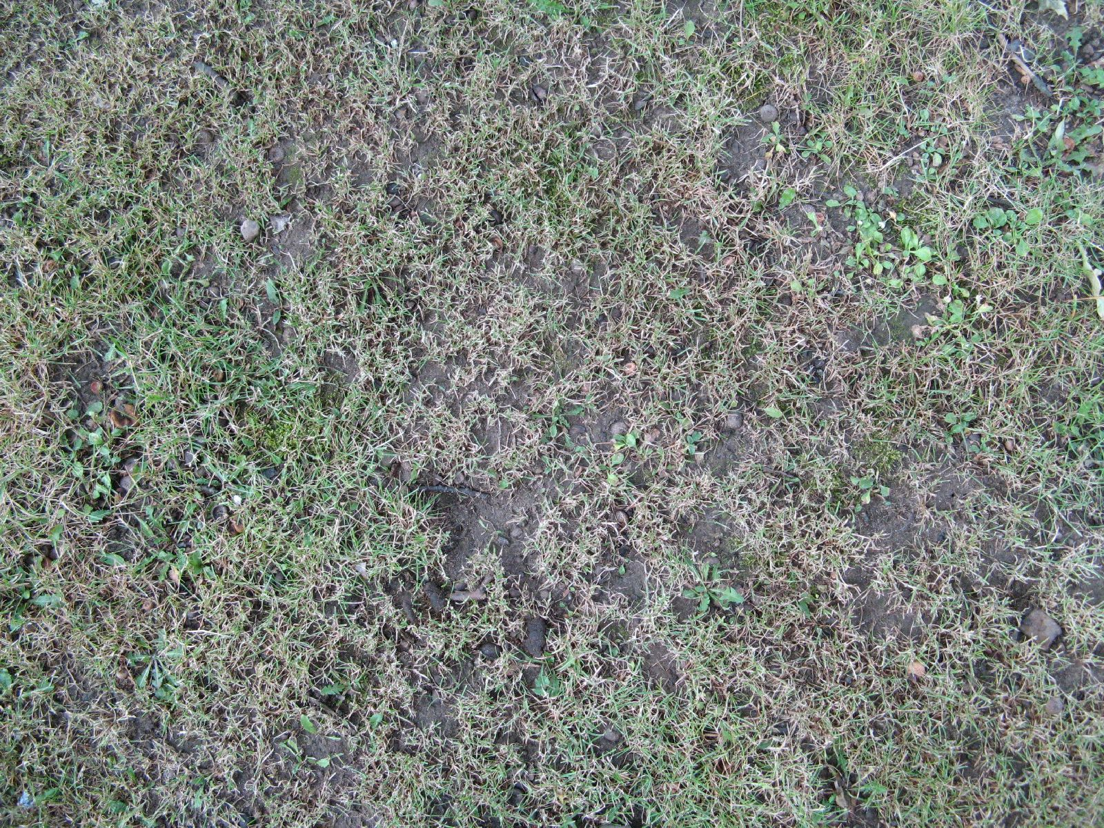 Ground-Nature_Texture_B_00772