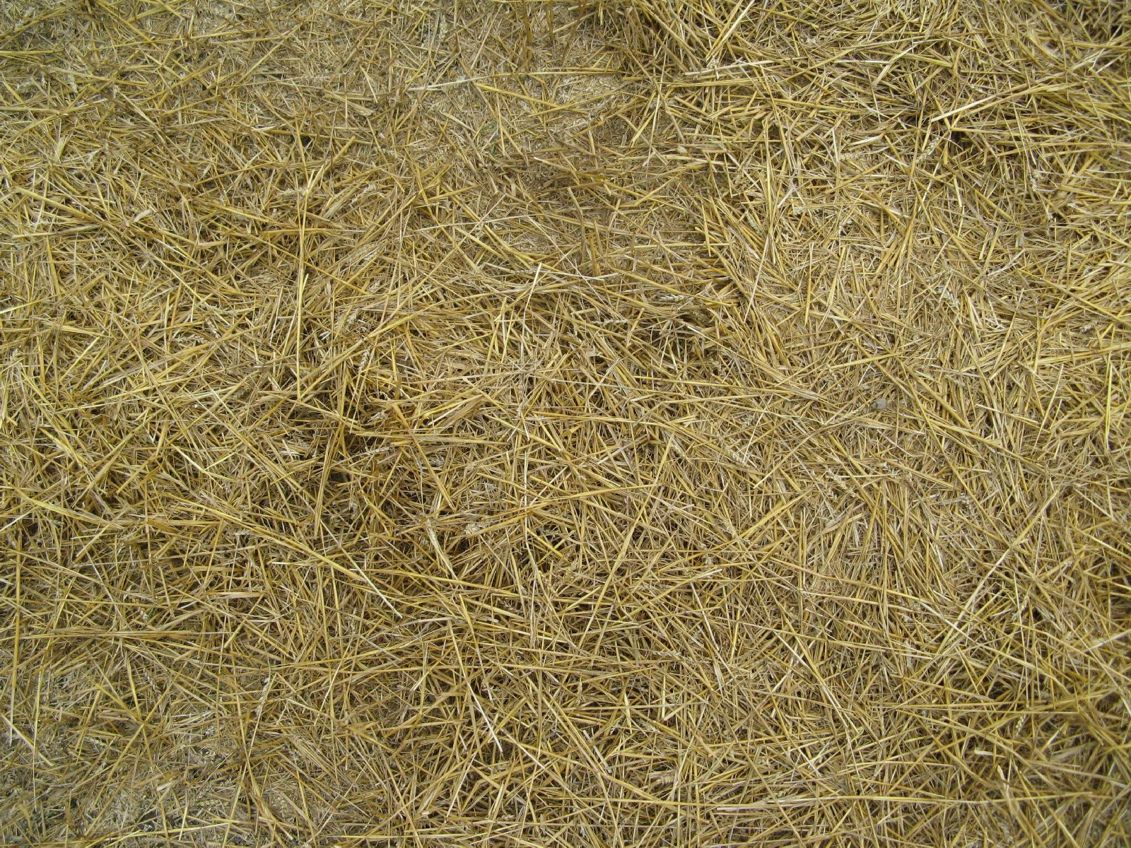 Ground-Nature_Texture_B_00933