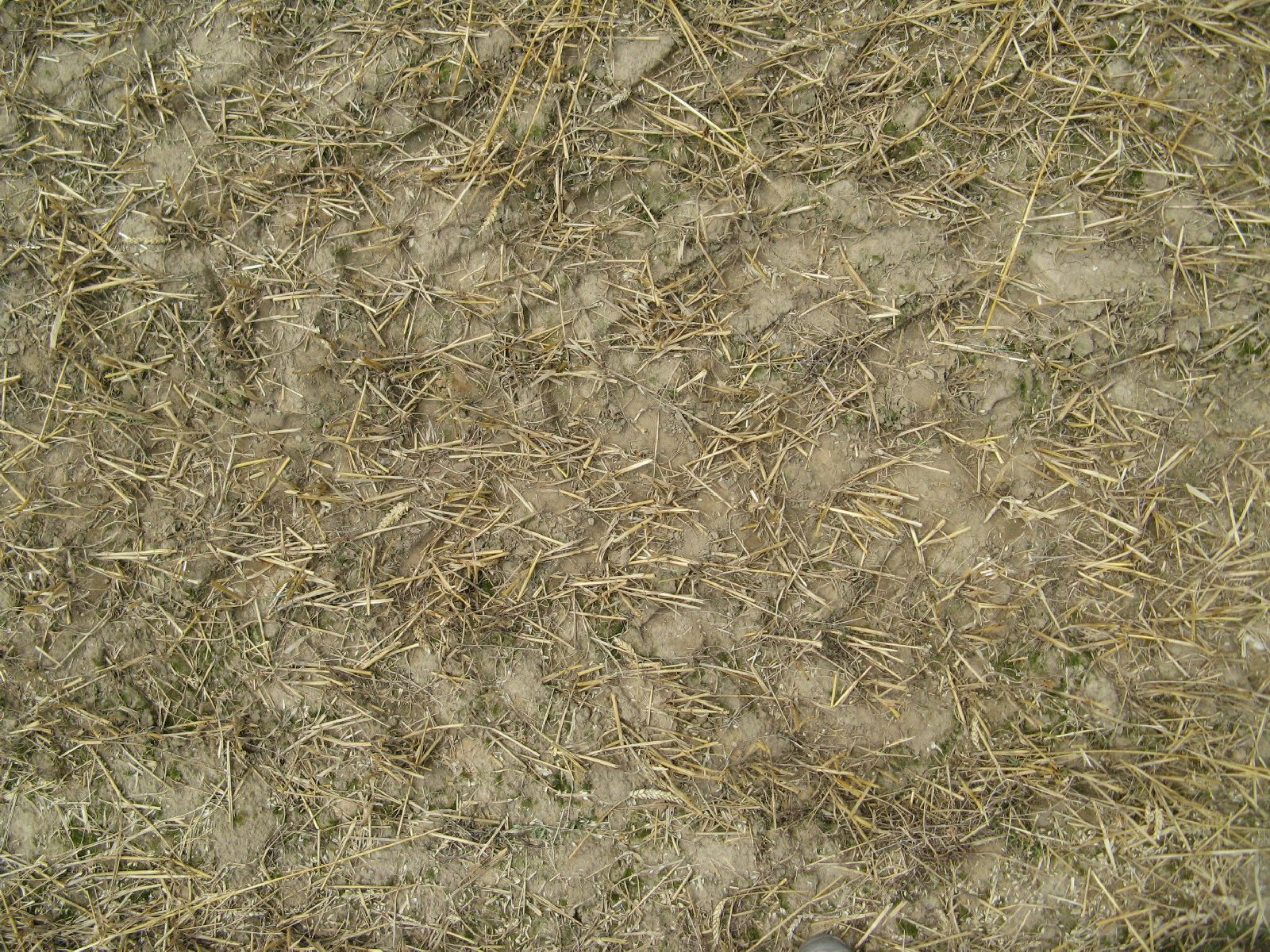 Ground-Nature_Texture_B_01020