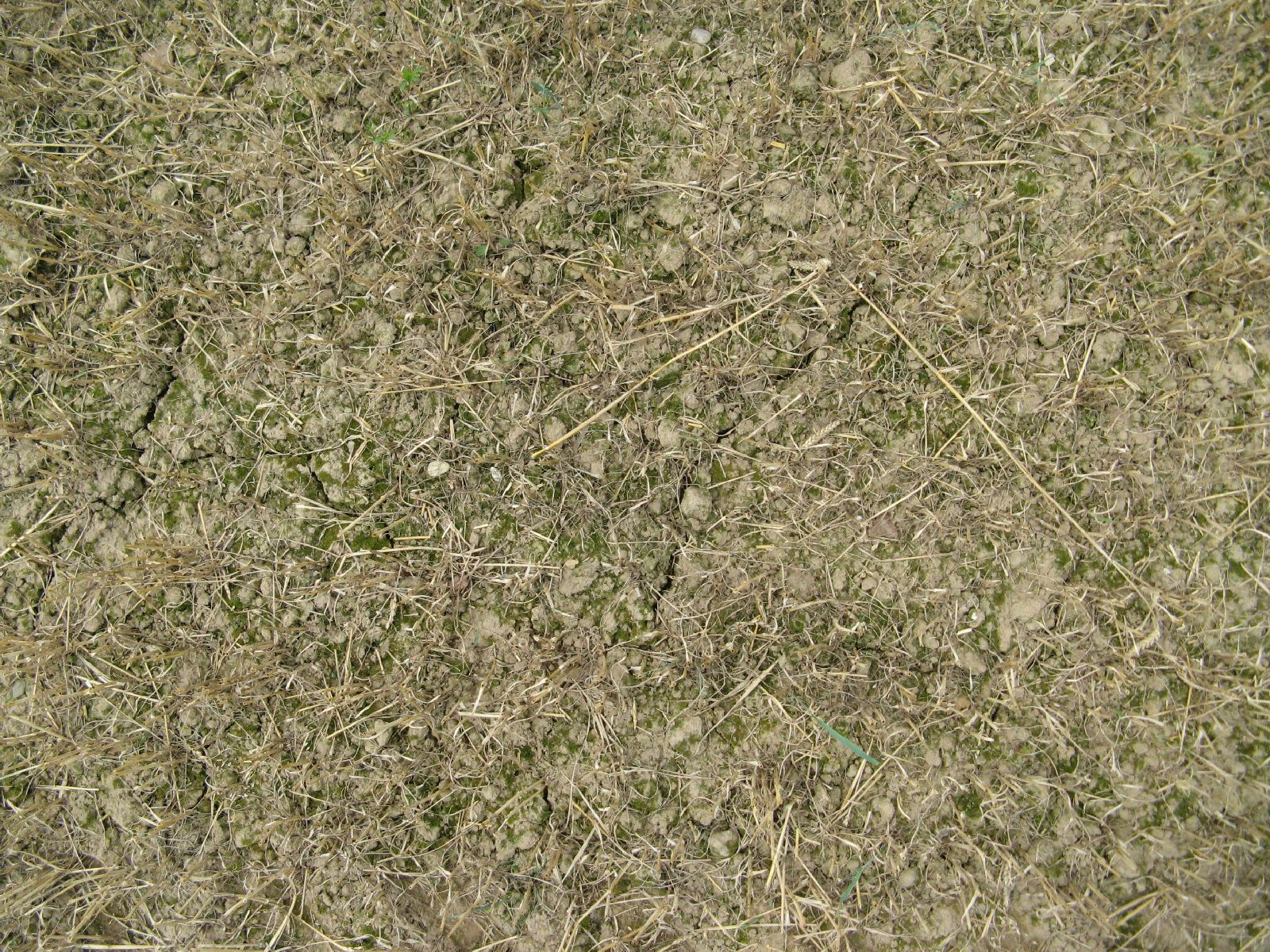 Ground-Nature_Texture_B_01022