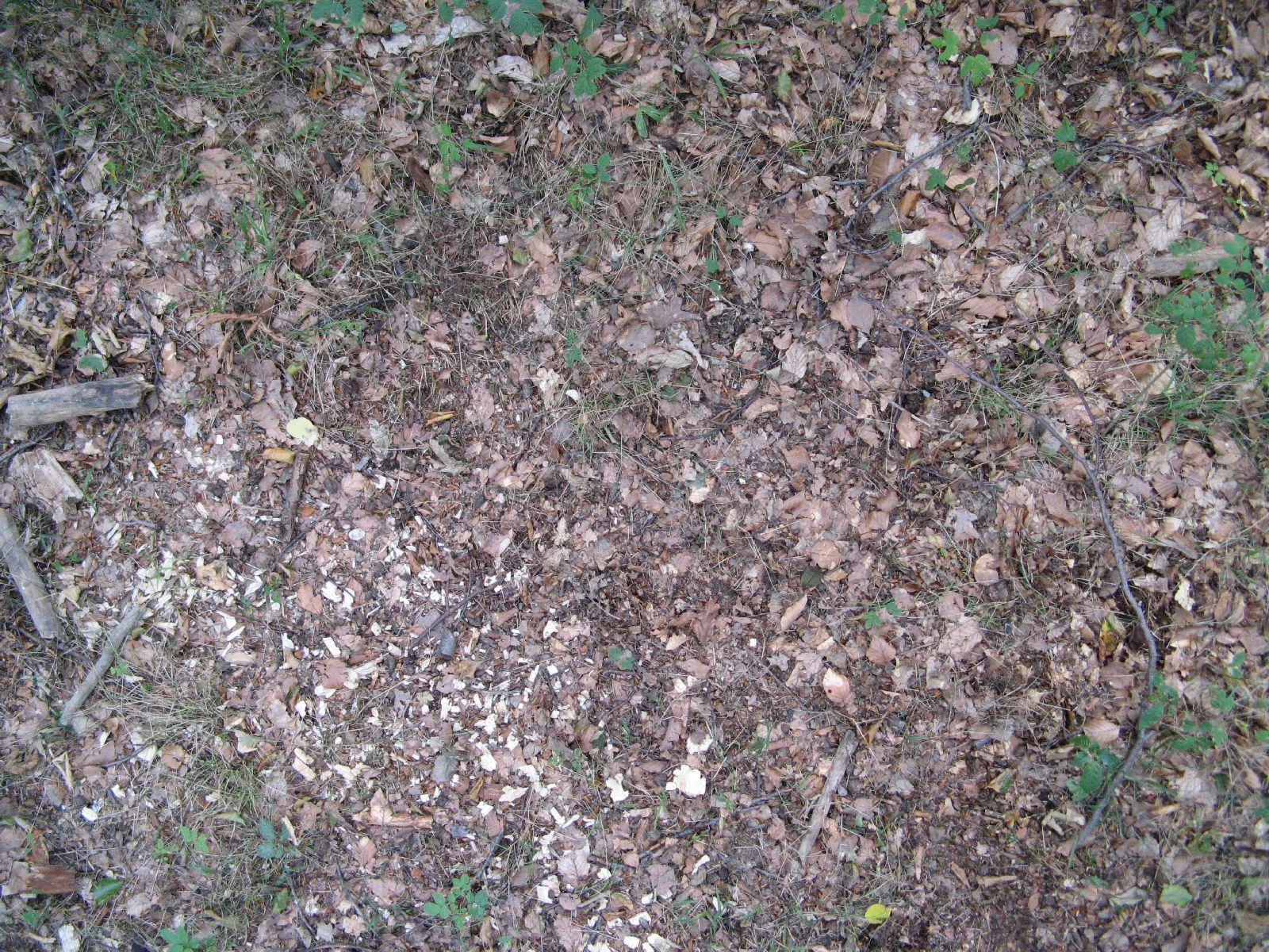 Ground-Nature_Texture_B_01028