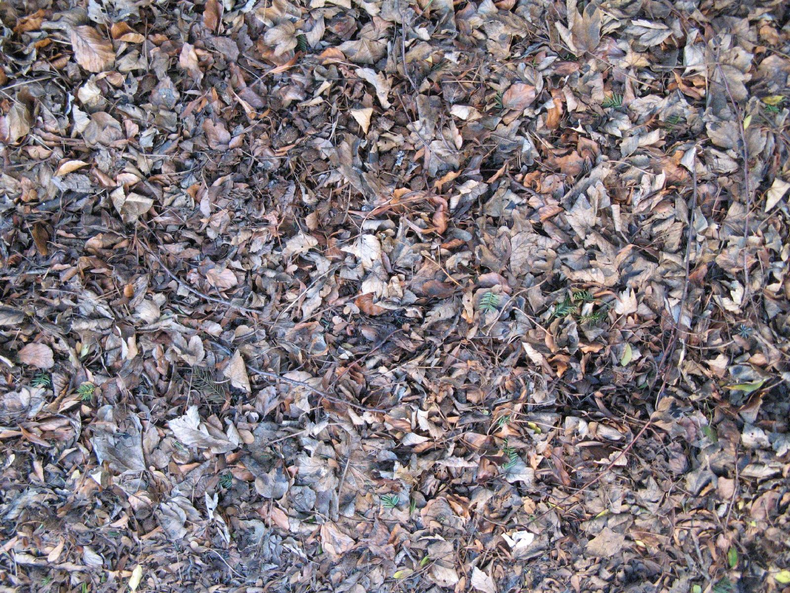 Ground-Nature_Texture_B_02808