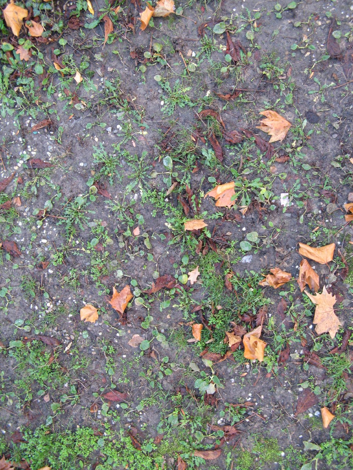 Ground-Nature_Texture_B_1053