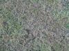 Ground-Nature_Texture_B_00772
