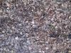 Ground-Nature_Texture_B_02808