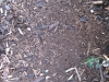 Ground-Nature_Texture_B_0884