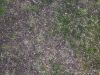Ground-Nature_Texture_A_P4120947