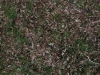Ground-Nature_Texture_A_P4120971