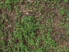 Ground-Nature_Texture_A_P4231719