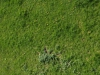 Ground-Nature_Texture_A_P4241791