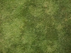 Ground-Nature_Texture_A_P5224447