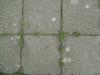 Ground-Add_Texture_B_3142
