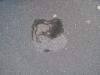 Ground-Add_Texture_B_4166