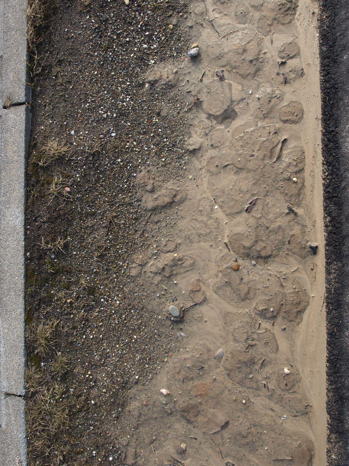 Ground-Urban_Texture_A_P3071193