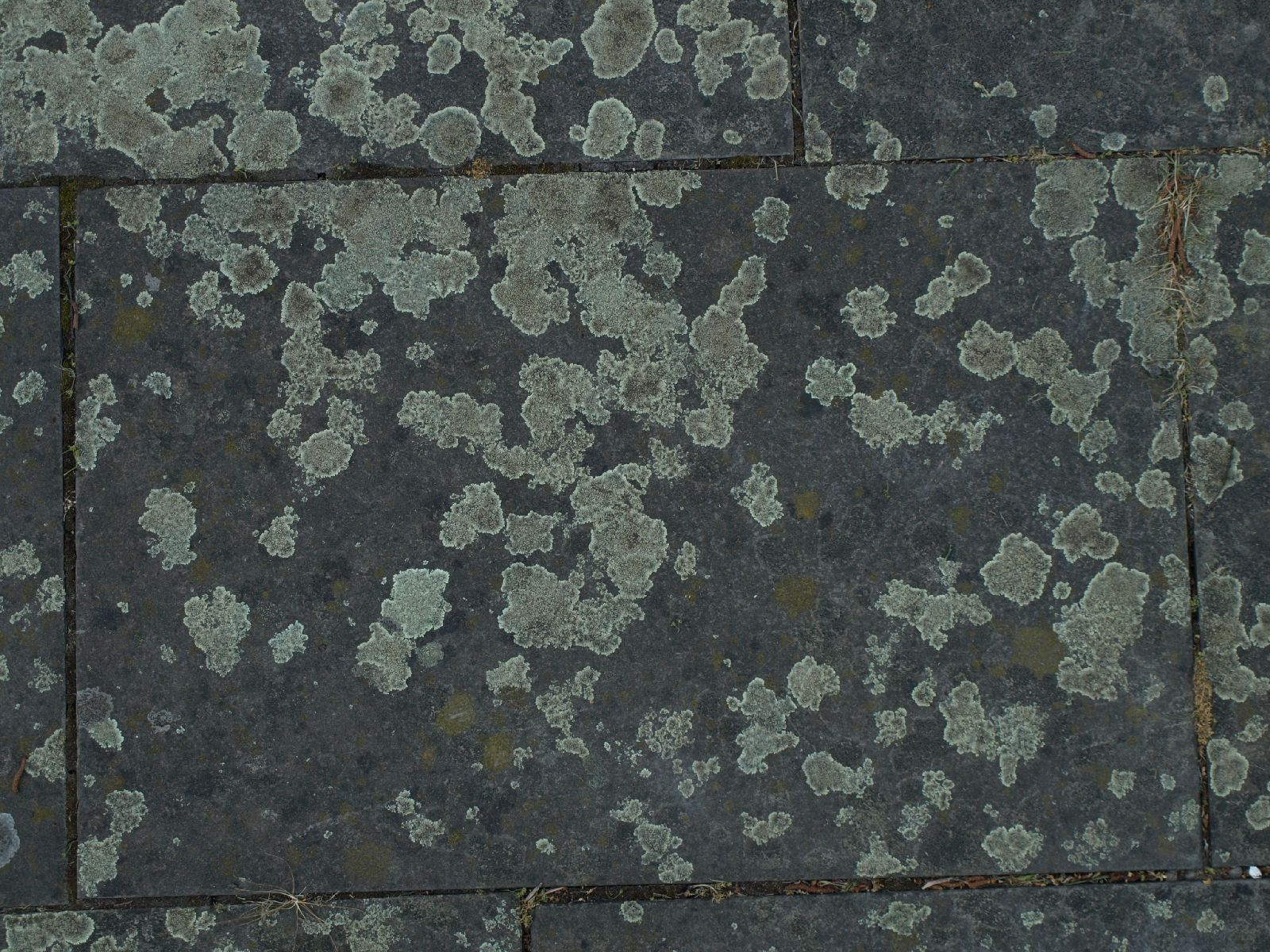 Ground-Urban_Texture_A_P5122664