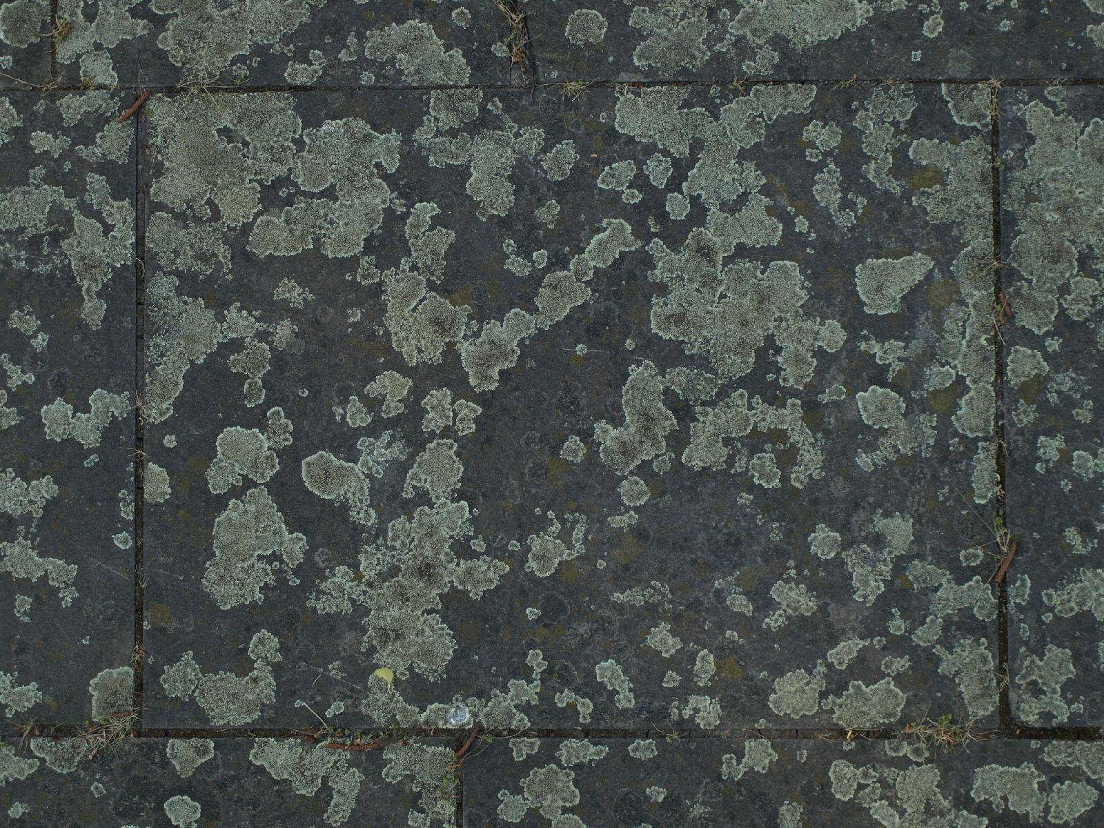 Ground-Urban_Texture_A_P5122665