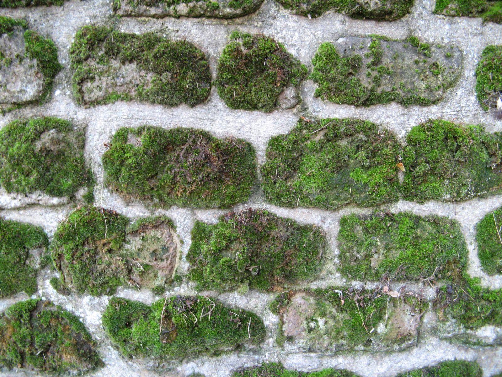 Ground-Urban_Texture_B_01310
