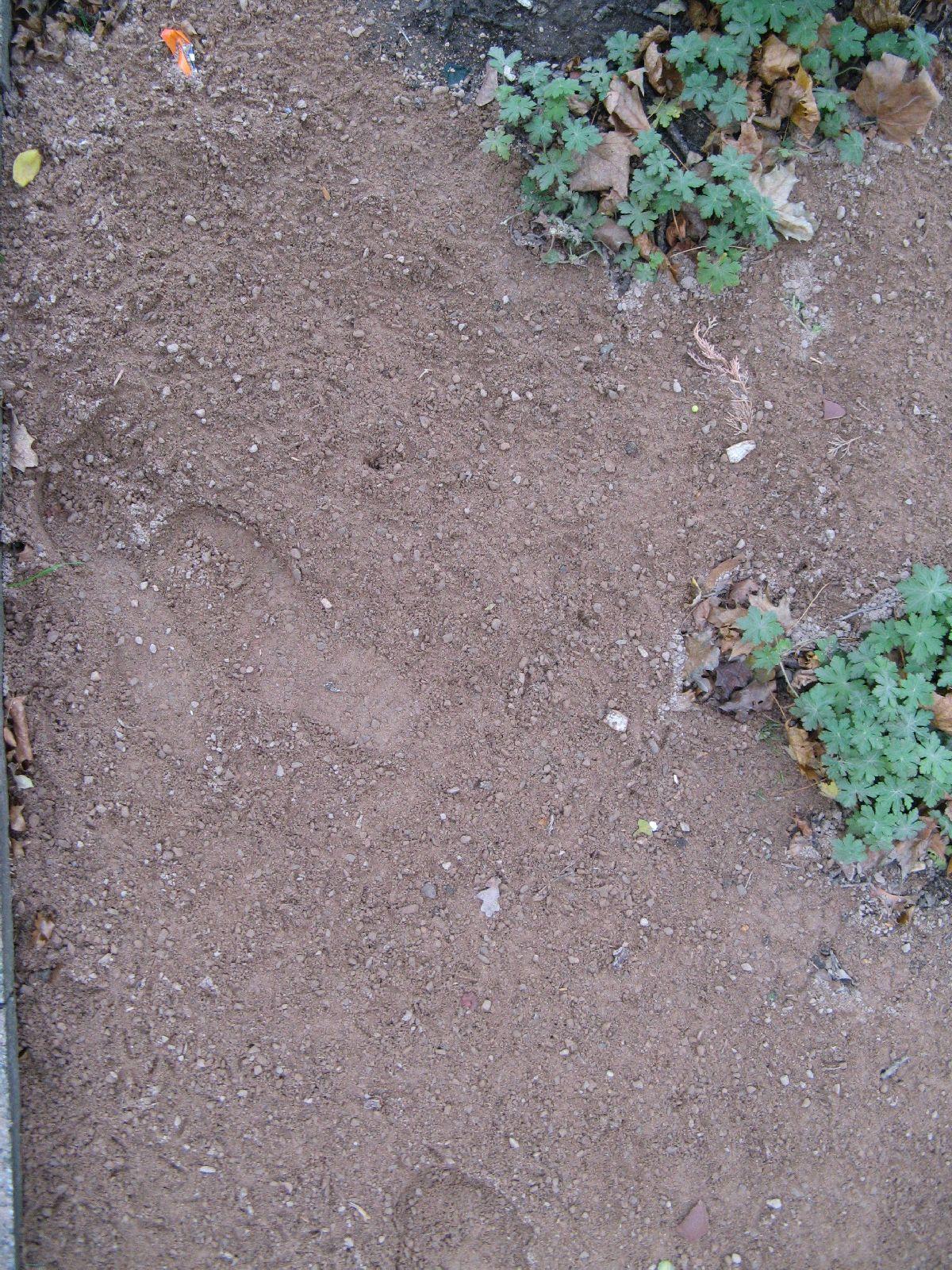 Ground-Urban_Texture_B_0686