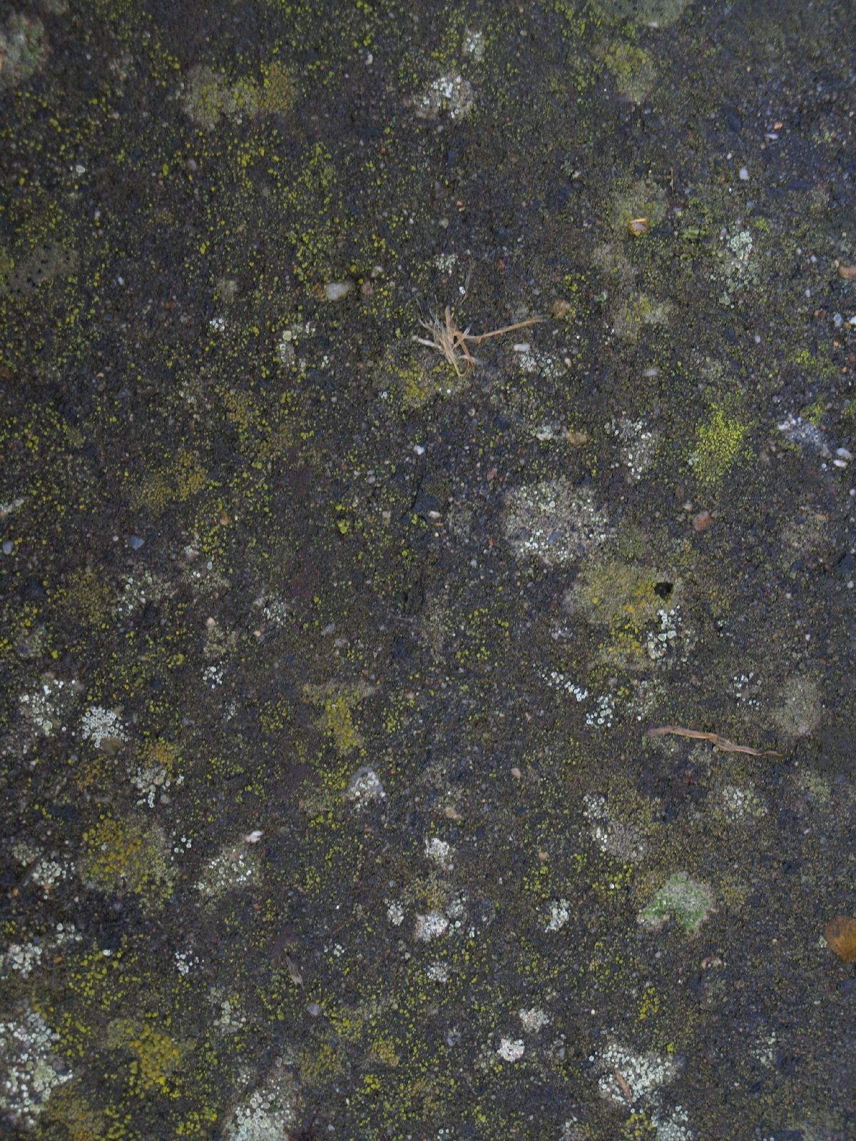 free grunge and dirt texture photo gallery
