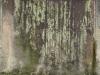 Grunge_Texture_A_P5313172