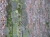 Grunge_Texture_B_0926