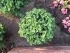 Plants-Bushes_Photo_Texture_B_03060