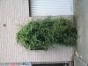 Plants-Bushes_Photo_Texture_B_03870