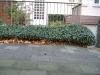 Plants-Bushes_Photo_Texture_B_10550