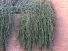 Plants-Bushes_Photo_Texture_B_11760