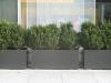 Plants-Bushes_Photo_Texture_B_3606