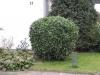 Plants-Bushes_Photo_Texture_B_5610
